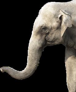 """Elefant """"Zambezi"""" aus Sambia"""